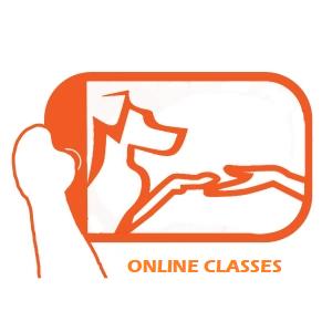 video-stream-classes_online